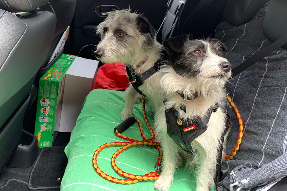 The dogs got the broader portion of the back seat, while the shallower side behind the driver was reserved for a box of pressies.